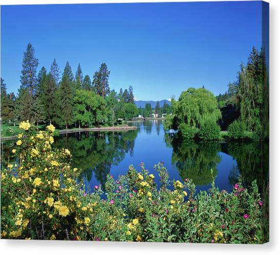 Drake Canvas Print - Yellow Roses By Mirror Pond by Panoramic Images
