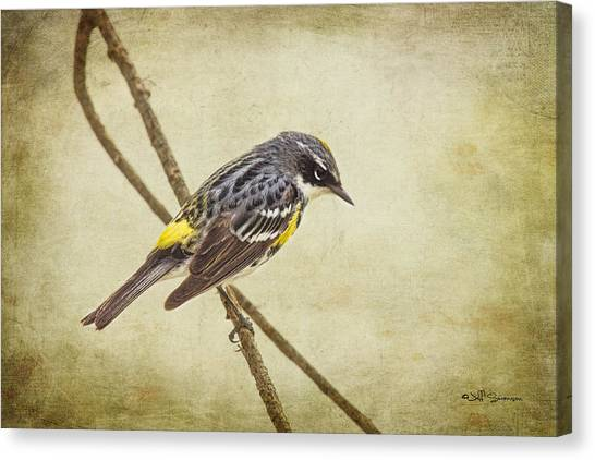 Yellow-rumped Warbler 2 Canvas Print by Jeff Swanson
