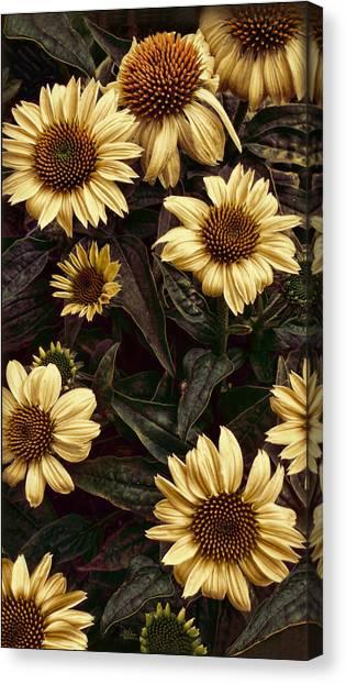 Yellow Sombrero Coneflower Canvas Print