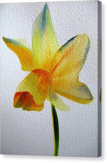 Yellow Spring Daffodil Canvas Print by Sacha Grossel