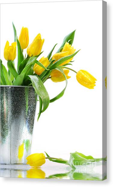 Yellow Spring Tulips Canvas Print
