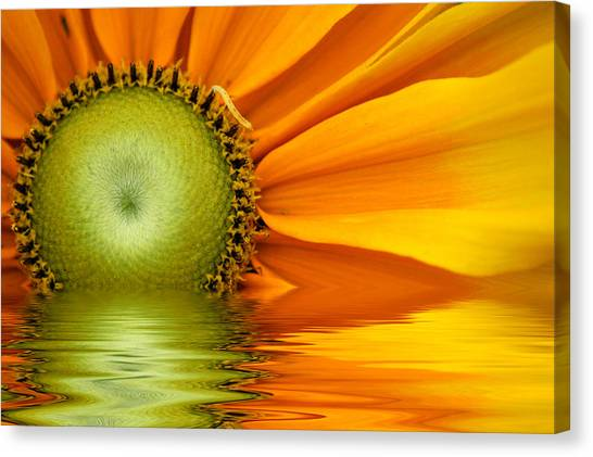 Yellow Sunflower Sunrise Canvas Print