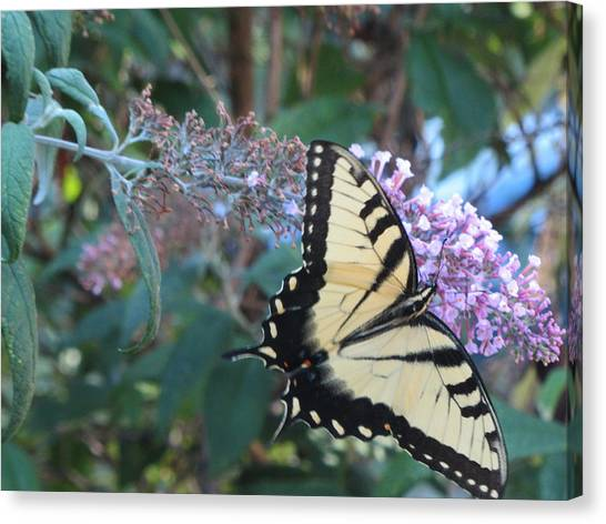 Yellow Swallowtail Butterfly Canvas Print by Debbie Nester