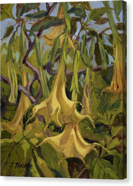 Yellow Trumpets Canvas Print