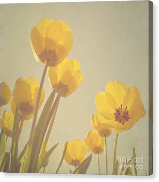 Yellow Flowers Canvas Print - Yellow Tulips by Diana Kraleva