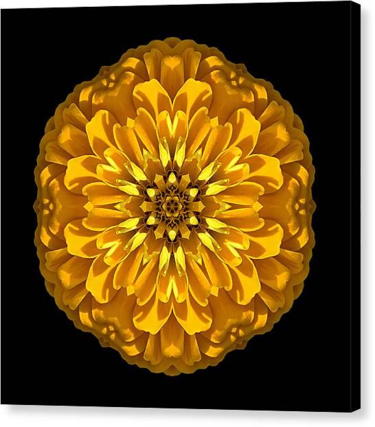 Yellow Zinnia Elegans Flower Mandala Canvas Print