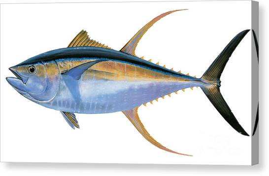 Spearfishing Canvas Print - Yellowfin Tuna by Carey Chen