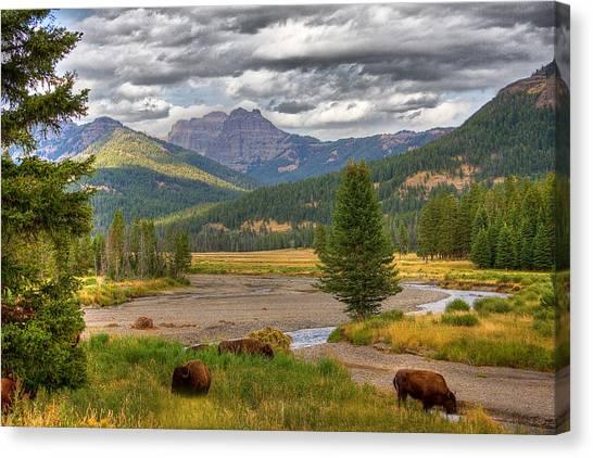 Yellowstone Bison Canvas Print by Michael H Spivak