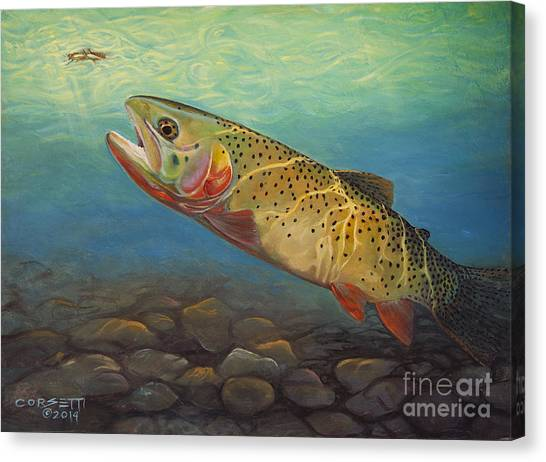 Yellowstone Cut Takes A Salmon Fly Canvas Print