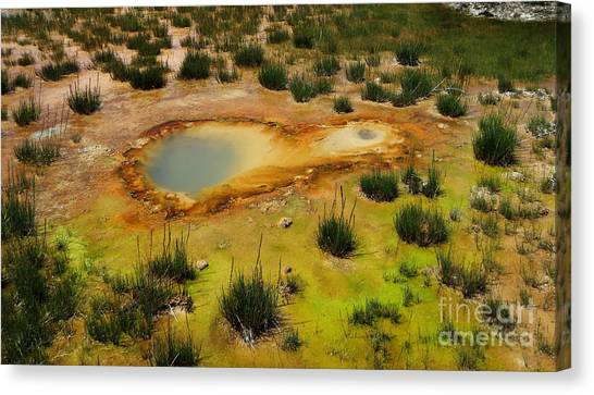 Yellowstone Hot Pool Canvas Print