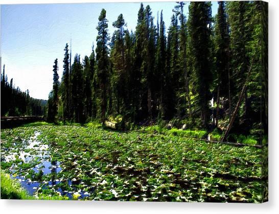 Yellowstone Lily Pads  Canvas Print