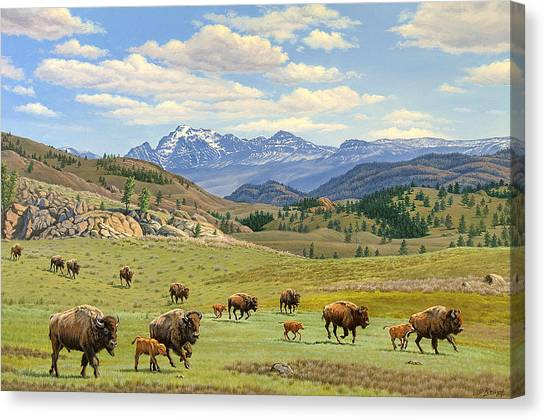 Bison Canvas Print - Yellowstone Spring by Paul Krapf