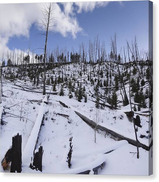 Yellowstone Winter Canvas Print by David Yack