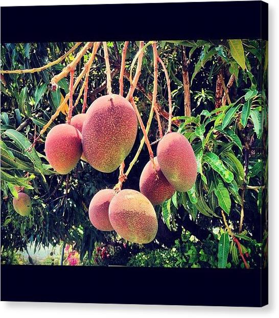 Mangos Canvas Print - Yes My Precious, Come To by Amber Crago