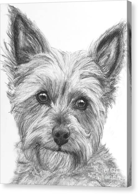 Yorkie Drawing Canvas Print