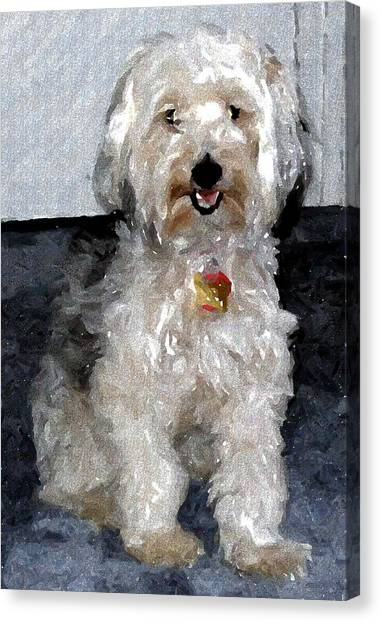 Yorkipoo Dog Canvas Print by Olde Time  Mercantile