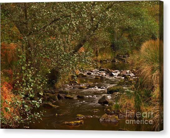 Yorkshire Moors Stream In Autumn Canvas Print