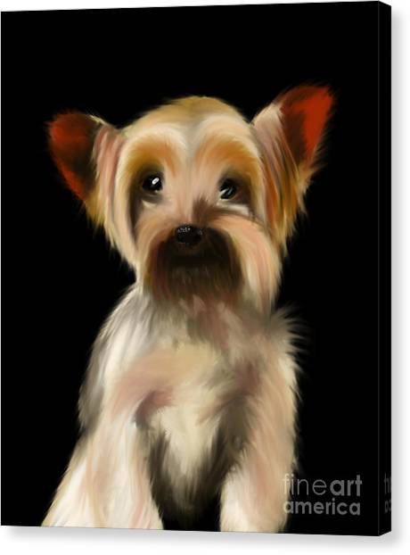 Yorkshire Terrier Pup Canvas Print