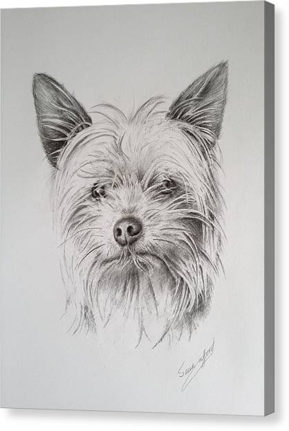 Yorkshire terrier canvas print yorkshire trrier by sean afford