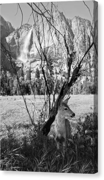Yosemite Falls And Fawn Canvas Print