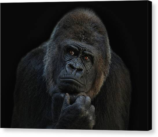 Primates Canvas Print - You Ain T Seen Nothing Yet by Joachim G Pinkawa