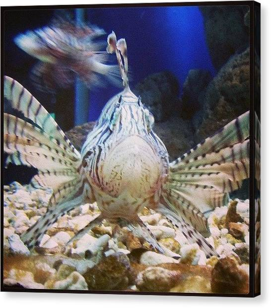 Aquariums Canvas Print - You Are Staring At Me by Oscar Del Mundo