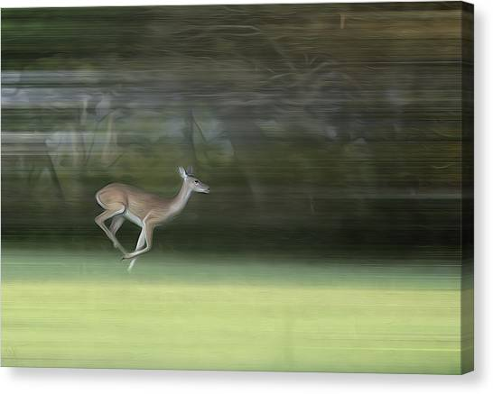 You Better Run Through The Jungle Canvas Print by Hazel Billingsley