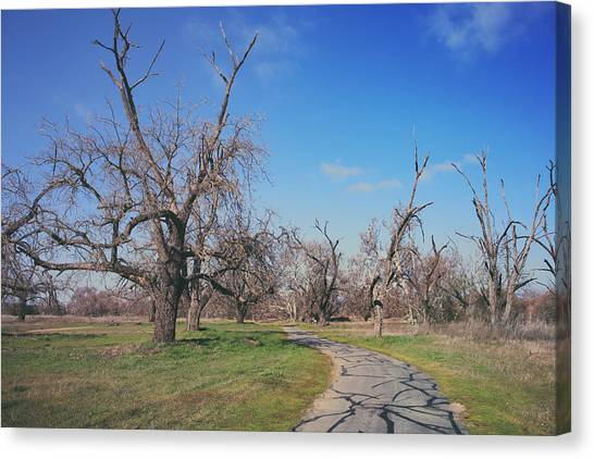Sycamores Canvas Print - You Gave Me A Reason by Laurie Search