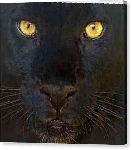 Panthers Canvas Print - You Know What Happens When U Cross A by Brandon Fisher