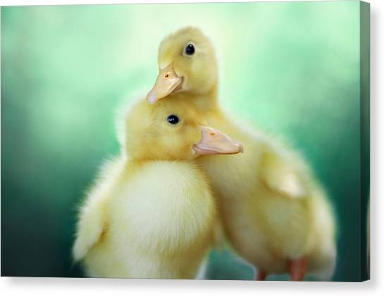 Ducks Canvas Print - You Make Me Smile by Amy Tyler