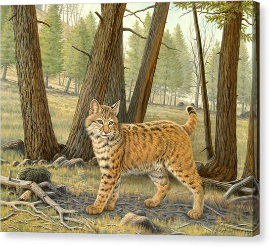 Yellowstone Canvas Print - Young Bobcat    by Paul Krapf