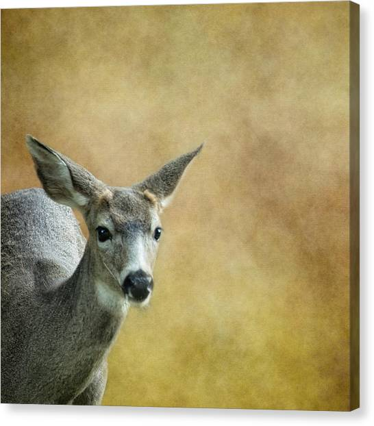Canvas Print featuring the photograph Young Buck by Belinda Greb