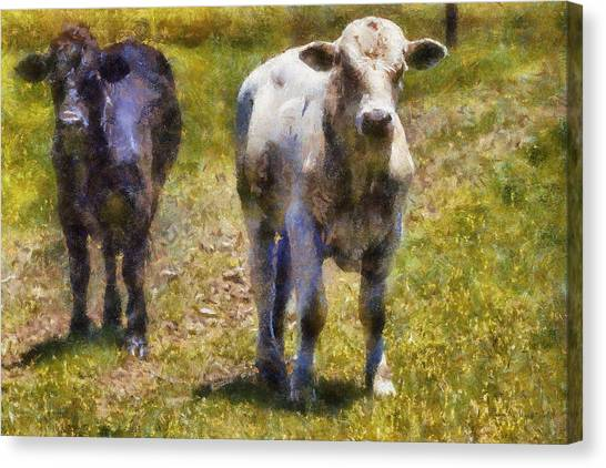 Young Bulls Canvas Print by Barry Jones