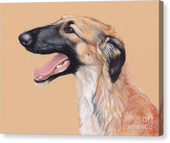 Young Female Borzoi Canvas Print by Charlotte Yealey