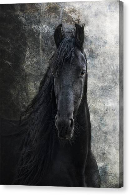 Black Stallion Canvas Print - Young Frisian Stallion by Joachim G Pinkawa