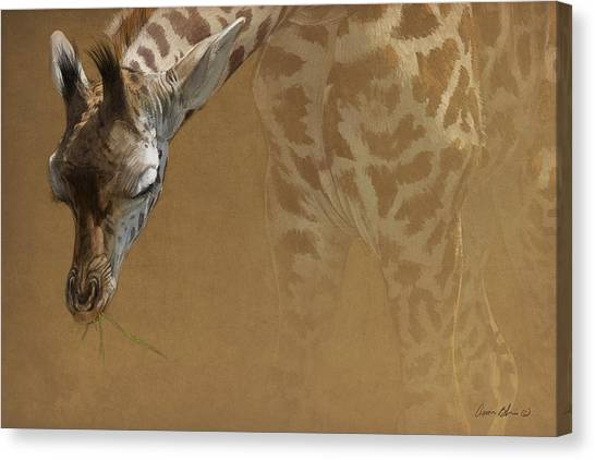 Giraffes Canvas Print - Young Giraffe by Aaron Blaise