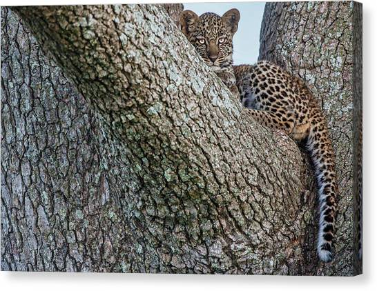 Camouflage Canvas Print - Young Leopard by Alessandro Catta