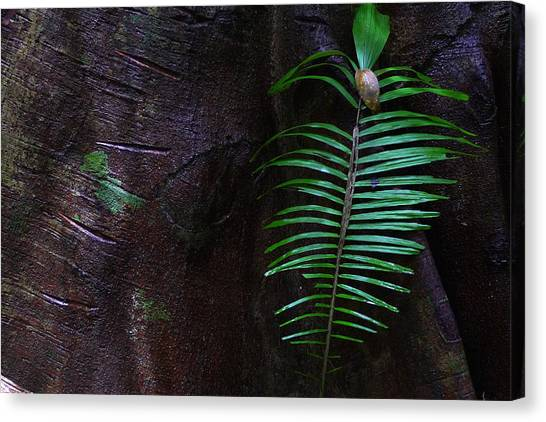 Palm Leaf Against Tree Canvas Print