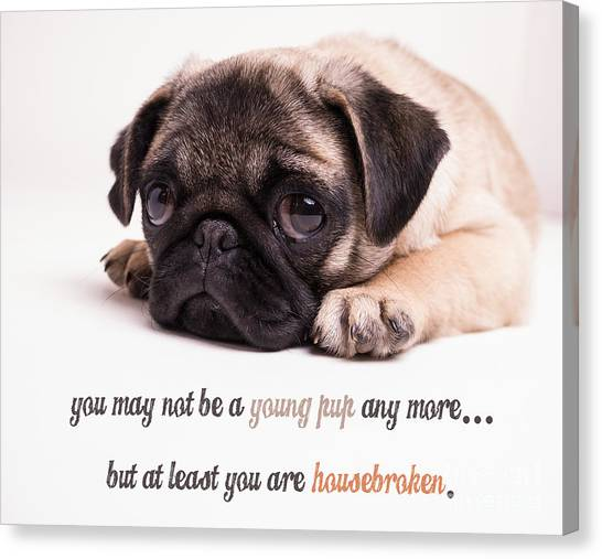 Happy Birthday Canvas Print - Young Pup by Edward Fielding
