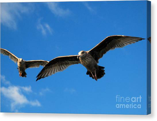 Young Wings Canvas Print