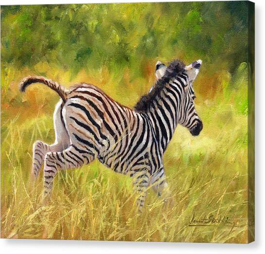 Zebras Canvas Print - Young Zebra by David Stribbling