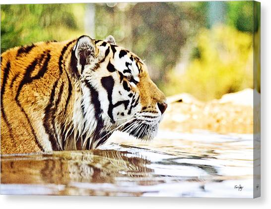The Tiger Canvas Print - You're Mine by Scott Pellegrin