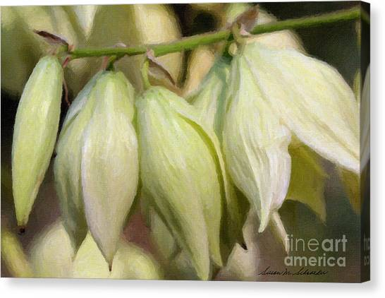 Yucca Flowers No. 1 Canvas Print