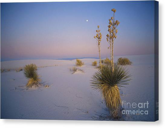 Sandy Desert Canvas Print - Yucca In White Sands by Mark Newman