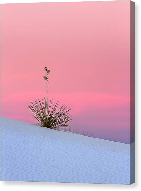 Yucca On Pink And White Canvas Print