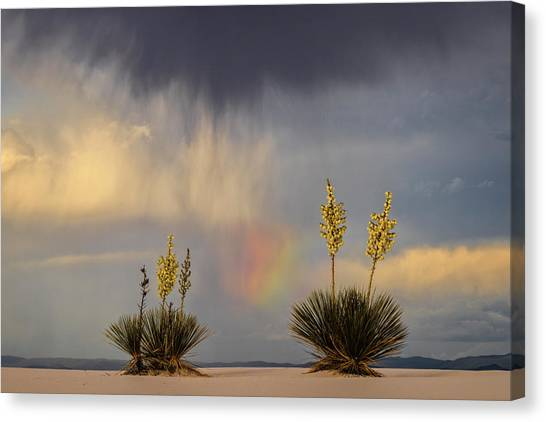 Yuccas, Rainbow And Virga Canvas Print by Don Smith