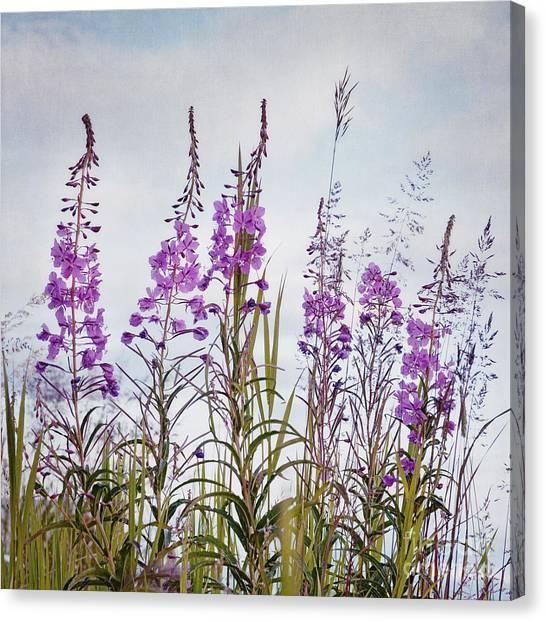 Yukon Canvas Print - Yukon State Flower by Priska Wettstein