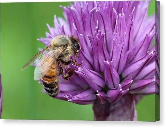 Yummm Chive Nectar Canvas Print