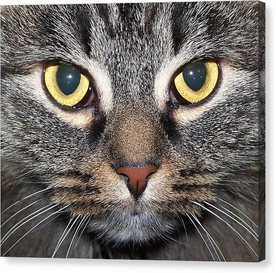 Yummy Cat Eyes Canvas Print
