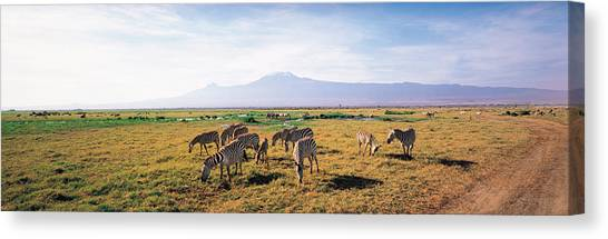 Mount Kilimanjaro Canvas Print - Zebra Amboseli Kenya by Panoramic Images